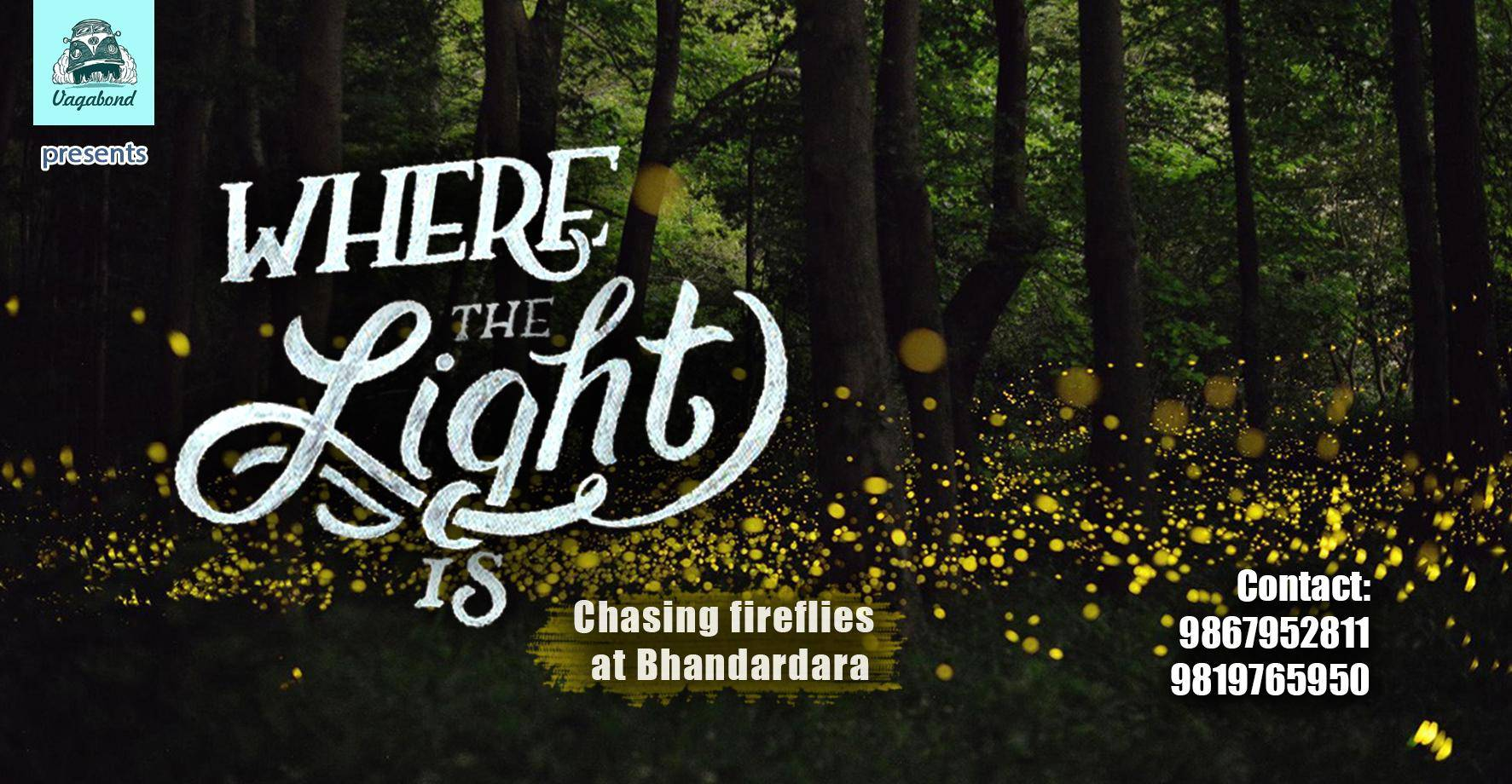 Where The Light Is (Chasing fireflies at Bhandardara)