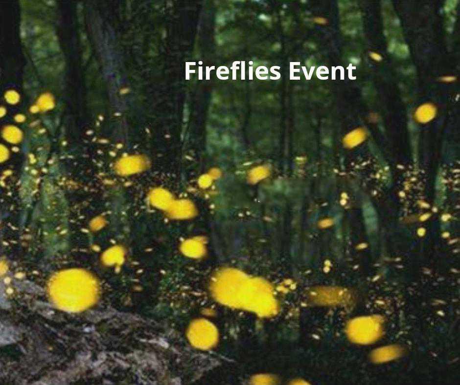 Prablamachi - Special Fireflies