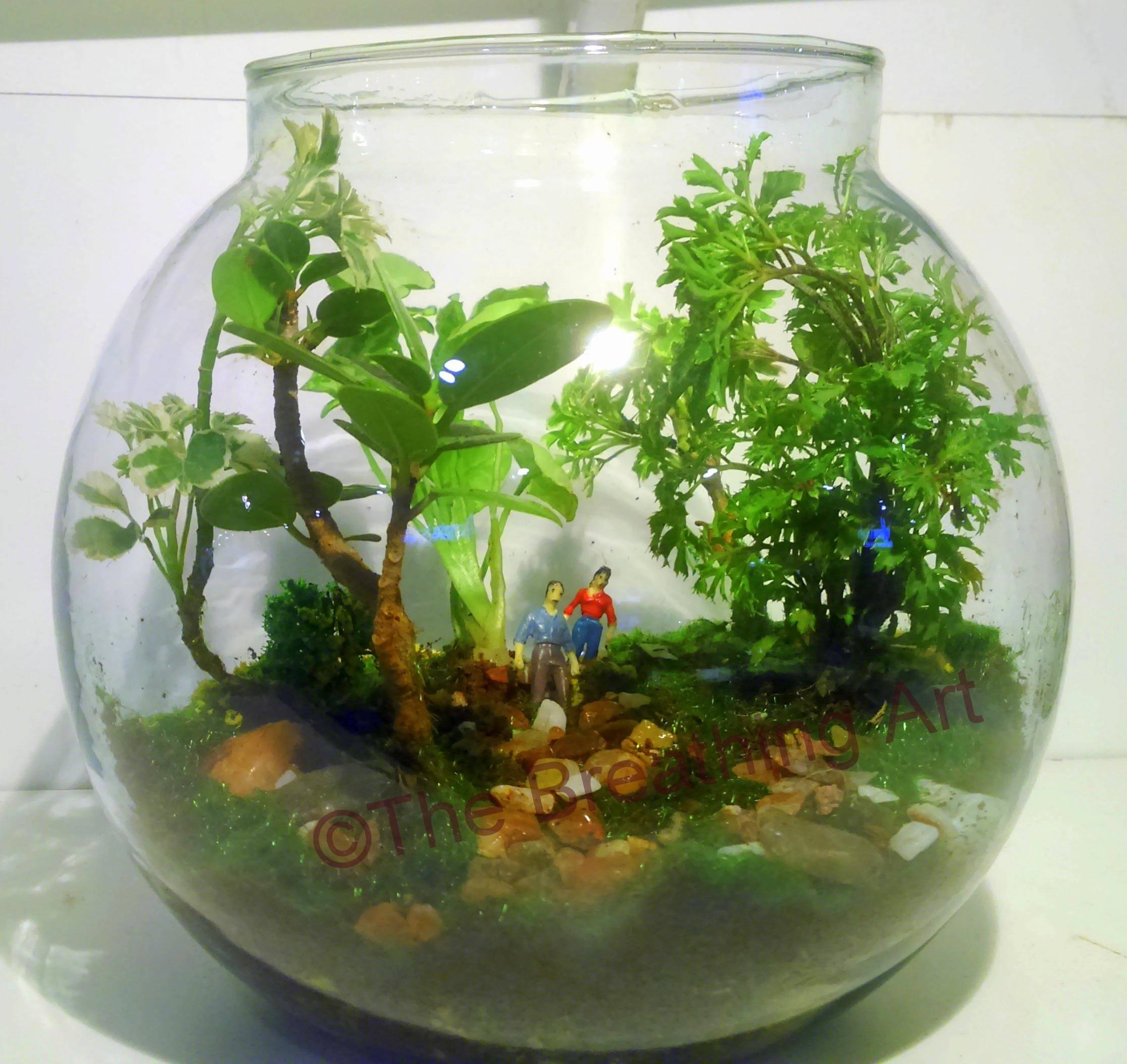 Terrarium Glass Garden Workshop - Closed Terrarium