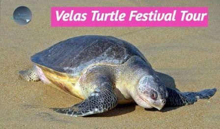 Velas Turtle Festival Tour Ex Mumbai